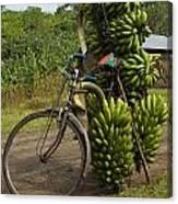 Banana Bike Canvas Print