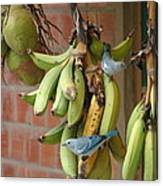 Banana Birds Canvas Print