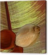 Banana Composition I Canvas Print