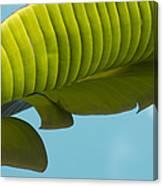 Banana Leaf And Maui Sky Canvas Print