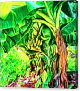 Bananas In Lahaina Maui Canvas Print