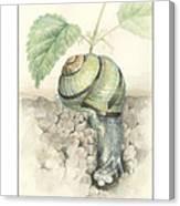 Banded Garden Snail  Canvas Print