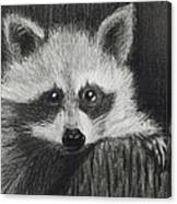 Bandit Canvas Print