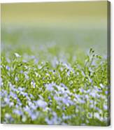 Bands Of Blue Canvas Print