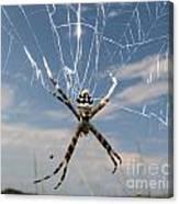 Banna Spider Canvas Print