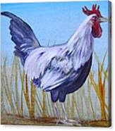 Bantam Rooster Canvas Print