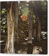 Banyan Tree Park Canvas Print
