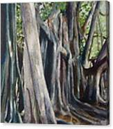 Banyan Trees Canvas Print
