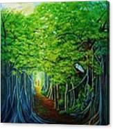Banyan Walk Canvas Print