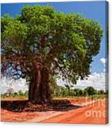 Baobab Tree On Red Soil Road Canvas Print