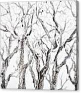 Bare Branches Print Option 2 Canvas Print