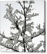 Bare Branches With Snow Canvas Print