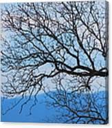 Bare Tree Against Blue Sky Canvas Print