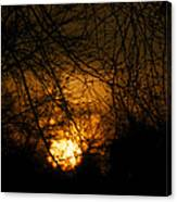 Bare Tree Branches With Winter Sunrise Canvas Print