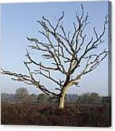 Bare Tree In Forest Canvas Print
