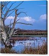 Bare Tree In Marsh Canvas Print