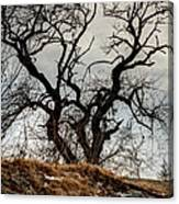 Bare Tree On The Hill Canvas Print