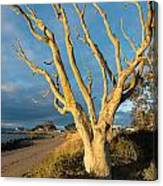 Bare Tree On The Spit Canvas Print