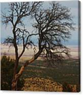 Bare Tree Canvas Print