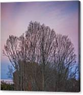 Bare Trees And Autumn Sky Canvas Print