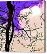 Bare Winter Branches Canvas Print