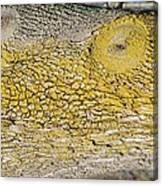 Bark Art Canvas Print