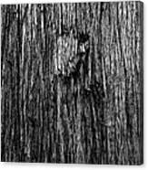 Bark Mark Canvas Print