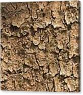 Bark Of A Tree Canvas Print