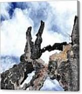 Bark To The Sky Canvas Print