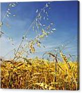 Barley And Oat Vertical Hdr Canvas Print