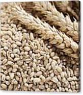 Barley Grains And Stalks Canvas Print