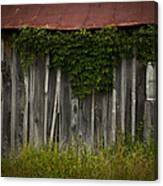 Barn Eyes Canvas Print