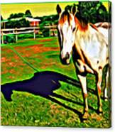 Barn Horse Canvas Print