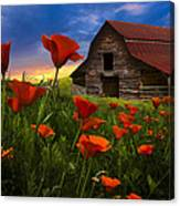 Barn In Poppies Canvas Print