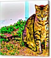 Barn Kitty Canvas Print