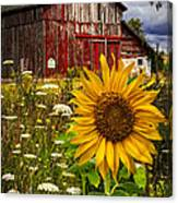 Barn Meadow Flowers Canvas Print
