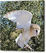 Barn Owl 2 Canvas Print