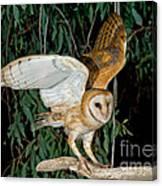 Barn Owl Alights Canvas Print