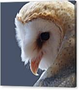 Barn Owl Dry Brushed Canvas Print