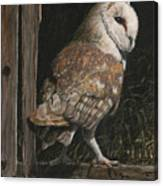 Barn Owl In The Old Barn Canvas Print