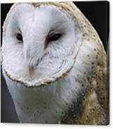 Barn Owl No.1 Canvas Print