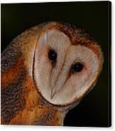 Barn Owl Portrait II Canvas Print