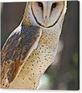 Barn Owl Raptor  Canvas Print
