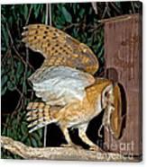Barn Owl With Prey Canvas Print