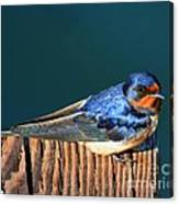 Barn Swallow Perching Canvas Print