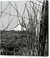 Barn Through Fence Canvas Print