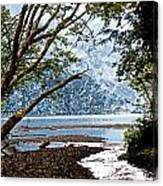 Barnes Creek At Lake Crescent - Washington Canvas Print