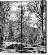 Barr Hammock Preserve  Canvas Print