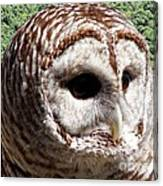 Barred Owl 2 Canvas Print