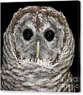 Barred Owl 3 Canvas Print